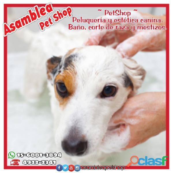 Peluquería canina. Estética para mascotas. 0