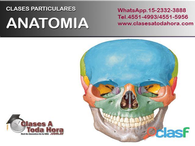 Clases particulares de anatomia, histologia y embriologia – profesor uba