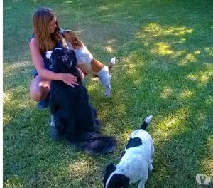 Guardería y pensionado canino l-bh
