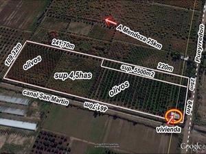 Maipu: fca de 4,5has sobre pavimento cerca ruta 60