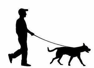 Paseo para perros, seriedad,respeto y cariño para tu