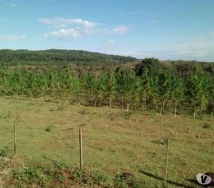 75 ha en venta con casa, arroyo, potrero y pino
