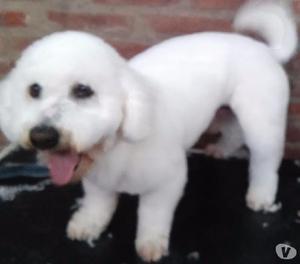 Peluqueria canina gratis