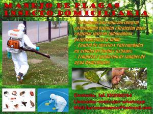Manejo de plagas insecto domiciliarias