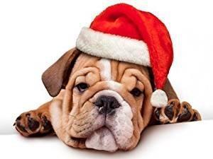Gorro navidad papa noel perros gatos moron julypets.