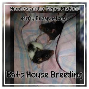 Ratitas para mascota con guia de cuidados y apto veterinario