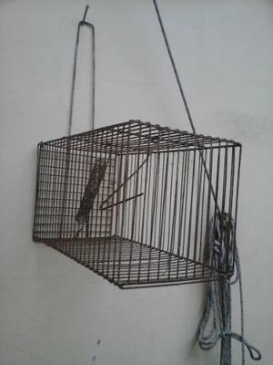 Trampera jaula para roedores