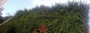 Jardinero limpieza de terrenos poda arboles mantenimiento en