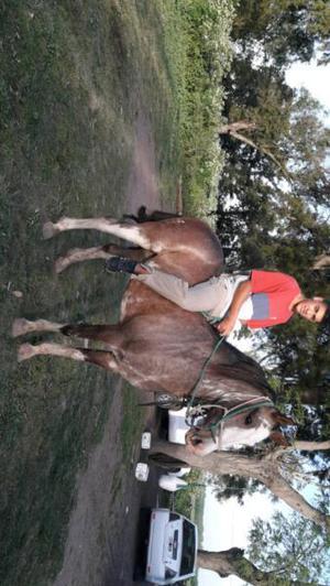 Vendo caballo overo colorado mando de andar garantizo