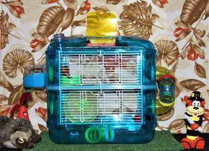 Hamstera acrilico 58x28x40 +haster +alimento+viruta +envio
