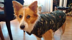 Campera abrigo ropa camuflada perros l y xl exclusivos