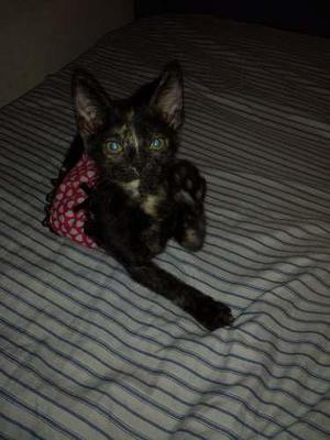 Gatitos en adopcion 1 mes y 2 meses