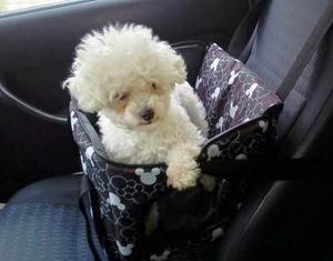 Bolso transportador mascotas