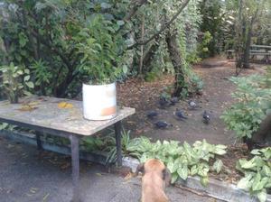 Alojamiento para mascotas $500 por día excelente atención