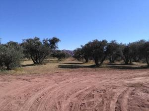 Finca con olivos y casa en villa mazan la rioja