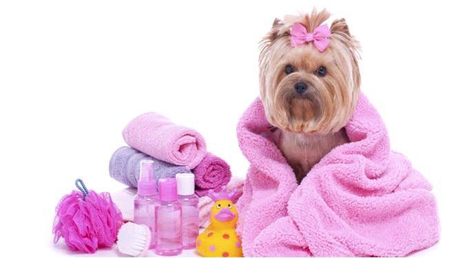 Peluqueria canina profesional fashion pets lanus