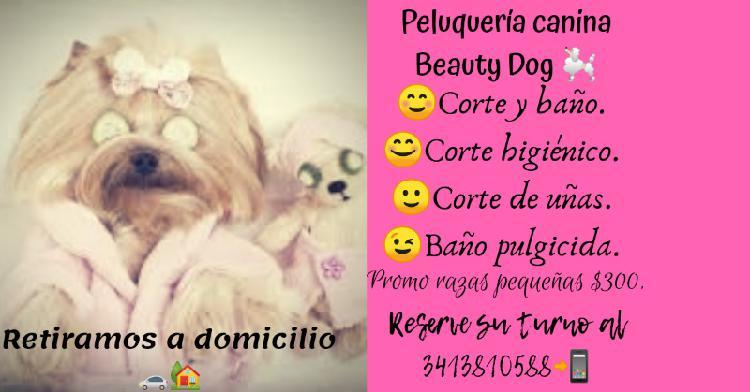 Peluquería canina beauty dog