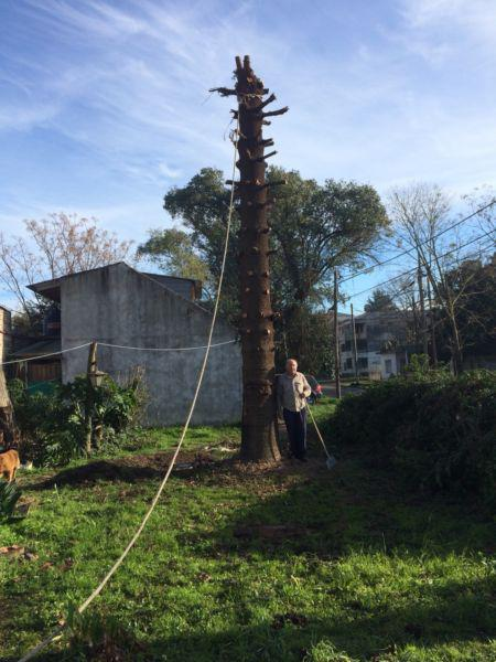 Poda y corte de arboles y palmeras en villa de mayo