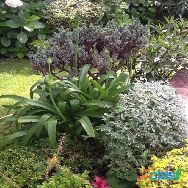 Jardinero con experiencia mantenimiento.podas. colocación plantas.