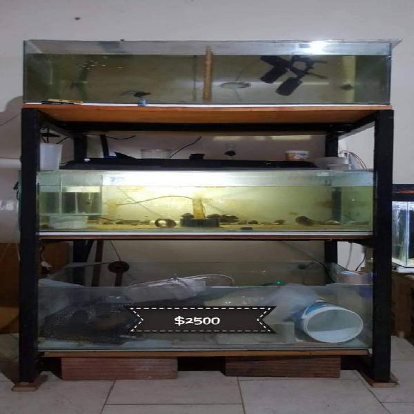 Estructura hierro bandejas crias peces