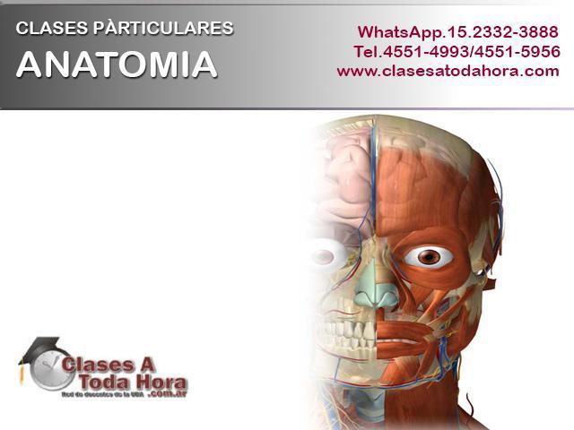 Clases particulares de anatomia para medicina y conexas –