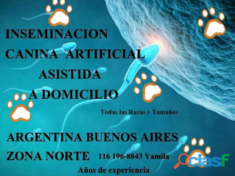 Inseminacion artificial canina a domicilio zona norte 1161968843