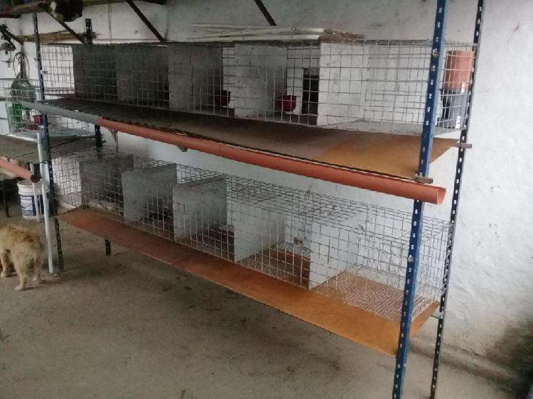 Jaulas para cría de conejos