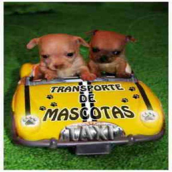 Traslados de mascotas
