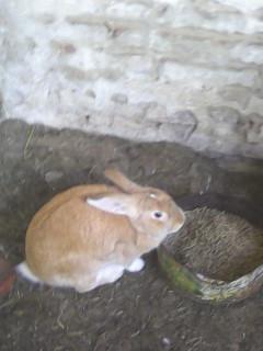 Conejos vendemos son la pareja y 4 mas