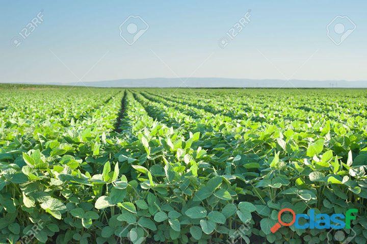 Campo 1034 has en arroyo algodón córdoba