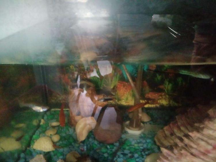 Vendo peces de tropicales