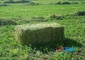 Fardos de alfalfa nuevos 1 calidad en mendoza