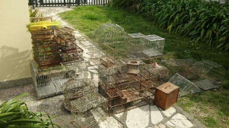 Gran lote de jaulas (40) - voladoras - metalicas - madera