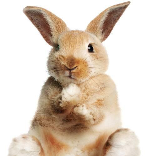 Alimento lego conejo domestico x 25 kg- a retirar