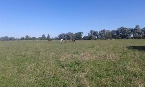 Caballos mansos para paseo, salto y polo
