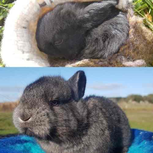 Conejo bebé gazapo