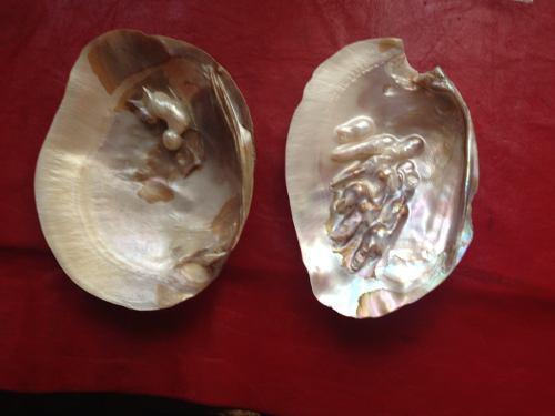 Antigua shell ostra con perlas nàcar madreperla una joya