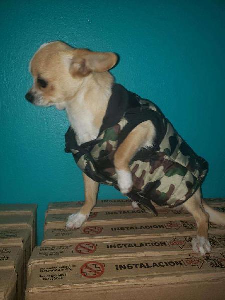 Chihuahua ofrece sus servicios