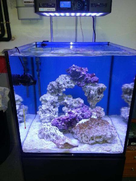 Vdo acuario marino