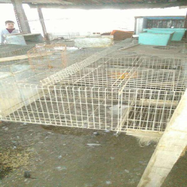 Vendo jaula para conejos