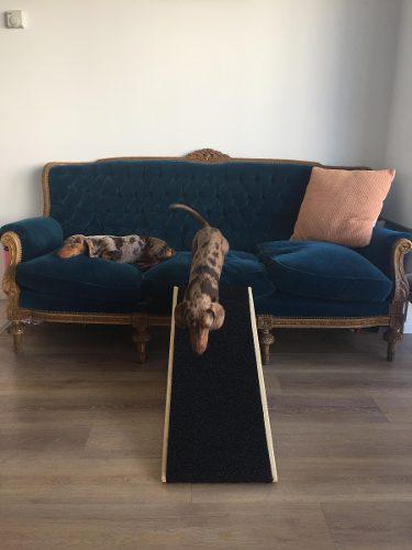 Rampa perros y mascotas dog's ramp- modelo roma /escalera/
