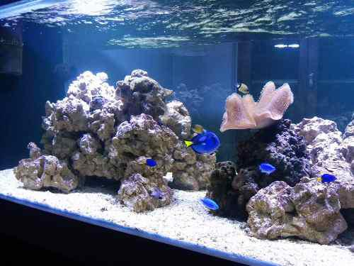 Argenrocks roca viva ceramica reef, acuario marino