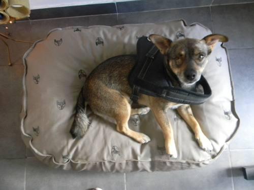 Colchón, cama, puff perros desmontable impermeable 70x50x15