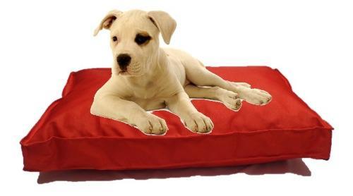 Colchón liso antidesgarro 70x50x8 cama perros mascotas