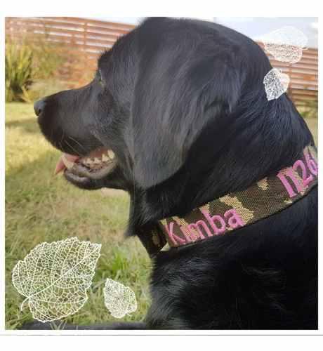 Collar de perro bordado personalizado de 3 cm dogideas