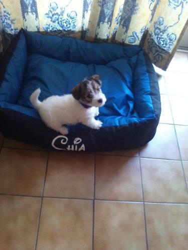 Cucha cama moises perros chicos 45 x 55 con nombre t1 tags