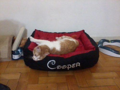 Cucha cama moises perros mediano 55 x 75 con nombre t3 tags