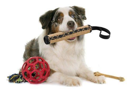 Juguete perros sisal entrenamiento golden cocker italiano