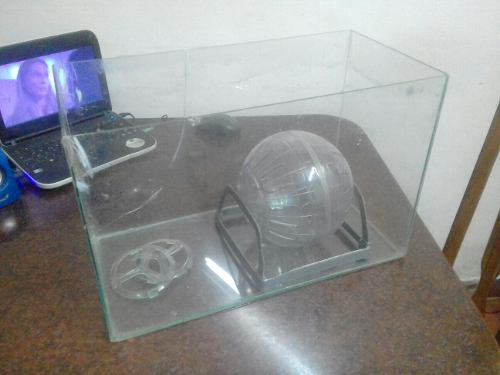 Pecera hámster con bola acrilica