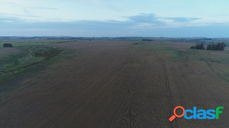 200 has agricolas zona san agustin